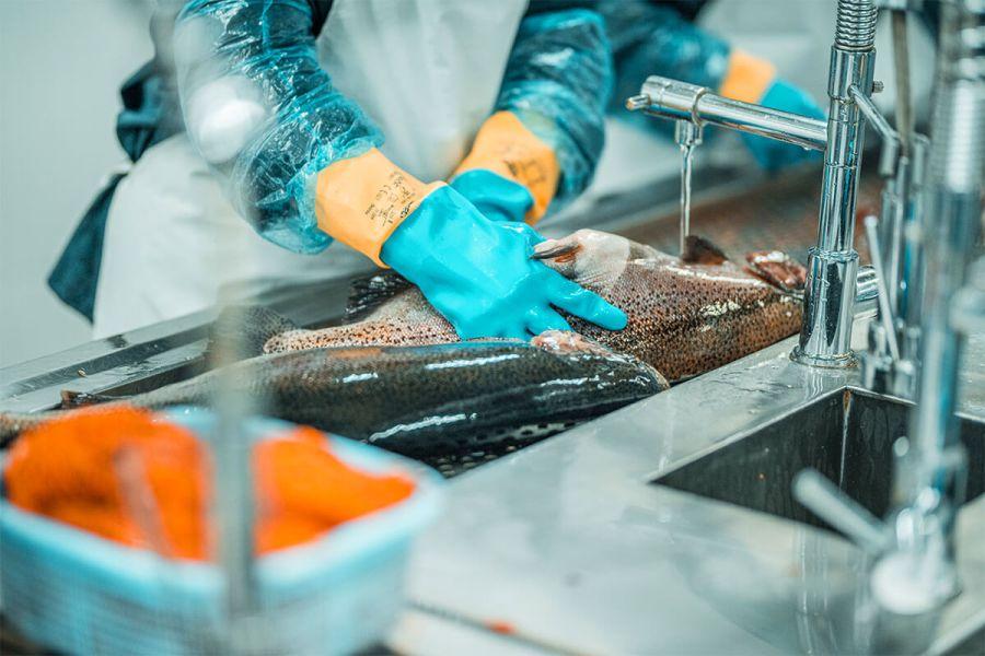 Fish Armenia